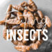 Disadvantage of eating insects