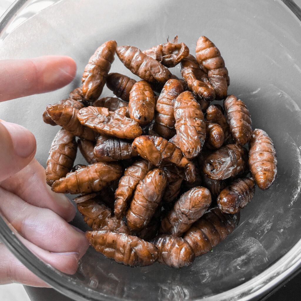 Insect protein