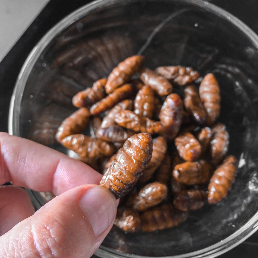 Eating bugs for protein